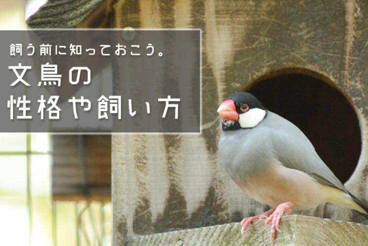 文鳥の性格や飼い方