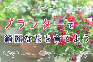 プランターで綺麗な花