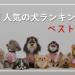 人気の犬ランキング