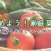 家庭菜園を始めよう!初心者向けの野菜と育てかたのコツ